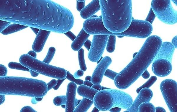 bào tử lợi khuẩn